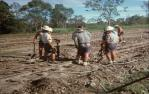 """<span class=""""caption-caption"""">A gang working on sugar cane tram tracks, near Childers</span>, 1976. <br />Slide, collection of <span class=""""caption-contributor"""">George Moller</span>."""
