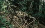 "<span class=""caption-caption"">Remains of Stinson airplane that crashed February 1937, Lamington National Park</span>, 1978. <br />Slide, collection of <span class=""caption-contributor"">John Boult</span>."