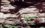 "<span class=""caption-caption"">Carnarvon Gorge, entrance ladder amphitheatre</span>, 1979. <br />Slide, collection of <span class=""caption-contributor"">John Boult</span>."