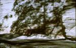 "<span class=""caption-caption"">Aboriginal rock art, Carnarvon National Park, Bauhinia Shire</span>, 1967. <br />Slide, collection of <span class=""caption-contributor"">Lynne Cain</span>."