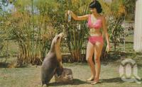 "<span class=""caption-caption"">Seal Park, Buderim</span>, c1970. <br />Postcard by <span class=""caption-publisher"">Bernard Kuskopf</span>, collection of <span class=""caption-contributor"">Centre for the Government of Queensland</span>."