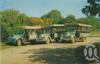 "<span class=""caption-caption"">Tourist buses, Magnetic Island</span>, c1970. <br />Postcard by <span class=""caption-publisher"">Murray Views Pty Ltd</span>, collection of <span class=""caption-contributor"">Centre for the Government of Queensland</span>."