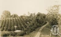 "<span class=""caption-caption"">Montville</span>, c1938. <br />Postcard by <span class=""caption-publisher"">Kodak</span>, collection of <span class=""caption-contributor"">Centre for the Government of Queensland</span>."