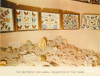 "<span class=""caption-caption"">The butterfly and shell collection at the Oasis</span>, c1960. <br />Postcard folder by <span class=""caption-publisher"">Sydney G Hughes Pty Ltd</span>, collection of <span class=""caption-contributor"">John Young</span>."