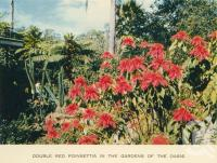 "<span class=""caption-caption"">Poinsettia in the gardens of the Oasis</span>, c1960. <br />Postcard folder by <span class=""caption-publisher"">Sydney G Hughes Pty Ltd</span>, collection of <span class=""caption-contributor"">John Young</span>."
