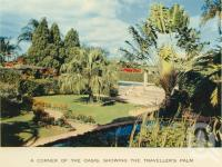 "<span class=""caption-caption"">The Oasis, showing traveller's palm</span>, c1960. <br />Postcard folder by <span class=""caption-publisher"">Sydney G Hughes Pty Ltd</span>, collection of <span class=""caption-contributor"">John Young</span>."