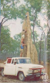 "<span class=""caption-caption"">Giant ant hill, Mareeba</span>, c1961. <br />Postcard folder by <span class=""caption-publisher"">GK Bolton</span>, collection of <span class=""caption-contributor"">John Young</span>."