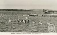 "<span class=""caption-caption"">Pelicans, Noosa River</span>, c1938. <br />Postcard by <span class=""caption-publisher"">Murray Views Pty Ltd</span>, collection of <span class=""caption-contributor"">Centre for the Government of Queensland</span>."