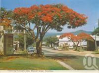 "<span class=""caption-caption"">Flowering poinciana trees, Blackall Street, Woombye</span>, c1965. <br />Postcard folder by <span class=""caption-publisher"">Bernard Kuskopf</span>, collection of <span class=""caption-contributor"">Centre for the Government of Queensland</span>."