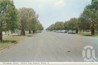 """<span class=""""caption-caption"""">Wyndham Street, Bottle Tree Avenue, Roma</span>, c1962. <br />Postcard folder by <span class=""""caption-publisher"""">Murray Views Pty Ltd</span>, collection of <span class=""""caption-contributor"""">Centre for the Government of Queensland</span>."""