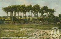 "<span class=""caption-caption"">Palm Grove, Convict Island, Rockhampton</span>, 1907. <br />Postcard by <span class=""caption-publisher"">Unknown Publisher</span>, collection of <span class=""caption-contributor"">Centre for the Government of Queensland</span>."