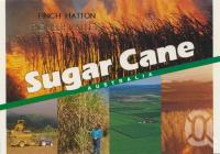 "<span class=""caption-caption"">Sugar cane, Pioneer Valley</span>, c1998. <br />Postcard by <span class=""caption-publisher"">Murray Views Pty Ltd</span>, collection of <span class=""caption-contributor"">Centre for the Government of Queensland</span>."