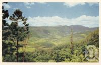 """<span class=""""caption-caption"""">Numinbah Valley Beechmont</span>. <br />From <span class=""""caption-book"""">Beautiful Brisbane and The Gold Coast</span>, <span class=""""caption-publisher"""">Sydney G Hughes</span>, 1950s, collection of <span class=""""caption-contributor"""">Fryer Library, UQ</span>."""