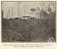 "<span class=""caption-caption"">Farm at Weerimba (Atherton Tableland)</span>. <br />From <span class=""caption-book"">Tablelands of North Queensland</span>, <span class=""caption-publisher"">Queensland Government Intelligence and Tourist Bureau</span>, 1918, collection of <span class=""caption-contributor"">Fryer Library, UQ</span>."