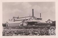 """<span class=""""caption-caption"""">Fairymead Sugar Mill</span>. <br />From <span class=""""caption-book"""">Views of Bundaberg</span>, <span class=""""caption-publisher"""">W Blaikie</span>, date unknown, collection of <span class=""""caption-contributor"""">Fryer Library, UQ</span>."""