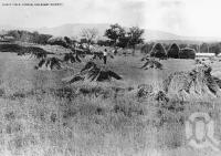 "<span class=""caption-caption"">Wheat Field, Yangan</span>. <br />From <span class=""caption-book"">Queensland Within</span>, <span class=""caption-publisher"">Brisbane</span>, 1916, collection of <span class=""caption-contributor"">Fryer Library, UQ</span>."