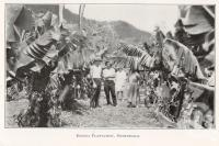 "<span class=""caption-caption"">Banana Plantation, Netherdale</span>. <br />From <span class=""caption-book"">The Mackay District</span>, <span class=""caption-publisher"">Queensland Government Intelligence and Tourist Bureau</span>, 1929, collection of <span class=""caption-contributor"">Fryer Library, UQ</span>."