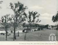 "<span class=""caption-caption"">The picturesque Nerang River with Nerang township nestling among the trees</span>. <br />From <span class=""caption-book"">Gold Coast: The story of the Gold Coast of Queensland and Hinterland</span>, 1958, collection of <span class=""caption-contributor"">John Young</span>."