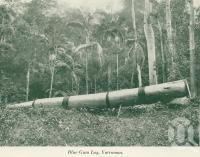"<span class=""caption-caption"">Blue gum log, Yarraman</span>, c1925. <br />Booklet, collection of <span class=""caption-contributor"">John Young</span>."
