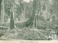 "<span class=""caption-caption"">Clearing scrub, Babinda</span>, c1925. <br />Booklet, collection of <span class=""caption-contributor"">John Young</span>."