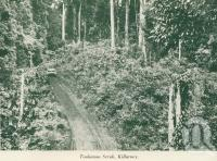 "<span class=""caption-caption"">Toolamon scrub, Killarney</span>, c1925. <br />Booklet, collection of <span class=""caption-contributor"">John Young</span>."