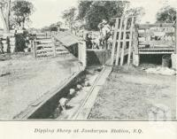 "<span class=""caption-caption"">Dipping sheep at Jondaryan Station</span>. <br />From <span class=""caption-book"">Queensland Sheep and Wool Industry</span>, <span class=""caption-creator"">Queensland Government Intelligence and Tourist Bureau</span>, Brisbane, 1918, collection of <span class=""caption-contributor"">Centre for the Government of Queensland</span>."