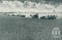 """<span class=""""caption-caption"""">A typical scene on the Darling Downs, Queensland. Harvesting the golden grain in one of Australia's vast wheat areas</span>. <br />From <span class=""""caption-book"""">Queensland The Jewel of Australia</span>, <span class=""""caption-publisher"""">Sydney G Hughes</span>, Brisbane, c1933, collection of <span class=""""caption-contributor"""">Centre for the Government of Queensland</span>."""