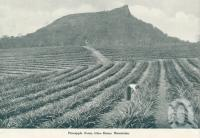 "<span class=""caption-caption"">Pineapple farm, Glass House Mountains</span>. <br />From <span class=""caption-book"">Queensland The Jewel of Australia</span>, <span class=""caption-publisher"">Sydney G Hughes</span>, Brisbane, c1933, collection of <span class=""caption-contributor"">Centre for the Government of Queensland</span>."