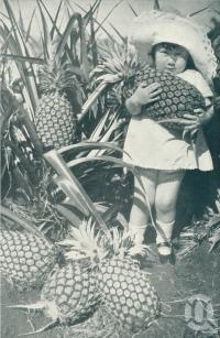"<span class=""caption-caption"">Typical Queensland products. A charming study on a pineapple farm</span>. <br />From <span class=""caption-book"">Queensland The Jewel of Australia</span>, <span class=""caption-publisher"">Sydney G Hughes</span>, Brisbane, c1933, collection of <span class=""caption-contributor"">Centre for the Government of Queensland</span>."