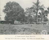 """<span class=""""caption-caption"""">A timber getter's home, Redlynch</span>. <br />From <span class=""""caption-book"""">Tours in the Cairns District, Handbook to Cairns and Hinterland</span>, <span class=""""caption-creator"""">Queensland Railways</span>, Brisbane, 1912, collection of <span class=""""caption-contributor"""">Centre for the Government of Queensland</span>."""