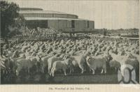 "<span class=""caption-caption"">Woolshed at Isis Downs</span>. <br />From <span class=""caption-book"">The Queen State</span>, <span class=""caption-creator"">D.C. Tilghman</span>, <span class=""caption-publisher"">John Mills</span>, Brisbane, 1933, collection of <span class=""caption-contributor"">Centre for the Government of Queensland</span>."