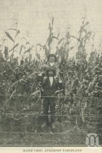 "<span class=""caption-caption"">Maize crop, Atherton Tableland</span>. <br />From <span class=""caption-book"">The Queen State</span>, <span class=""caption-creator"">D.C. Tilghman</span>, <span class=""caption-publisher"">John Mills</span>, Brisbane, 1933, collection of <span class=""caption-contributor"">Centre for the Government of Queensland</span>."