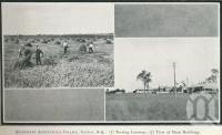 "<span class=""caption-caption"">Queensland Agricultural College, Gatton</span>. <br />From <span class=""caption-book"">Glimpses of Sunny Queensland (3rd edition)</span>, <span class=""caption-creator"">Queensland Government Intelligence and Tourist Bureau</span>, Brisbane, 1914, collection of <span class=""caption-contributor"">Centre for the Government of Queensland</span>."