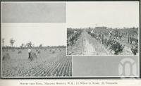 """<span class=""""caption-caption"""">Scenes near Roma, Maranoa District</span>. <br />From <span class=""""caption-book"""">Glimpses of Sunny Queensland (3rd edition)</span>, <span class=""""caption-creator"""">Queensland Government Intelligence and Tourist Bureau</span>, Brisbane, 1914, collection of <span class=""""caption-contributor"""">Centre for the Government of Queensland</span>."""