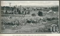 "<span class=""caption-caption"">View overlooking Woombye</span>. <br />From <span class=""caption-book"">Glimpses of Sunny Queensland (3rd edition)</span>, <span class=""caption-creator"">Queensland Government Intelligence and Tourist Bureau</span>, Brisbane, 1914, collection of <span class=""caption-contributor"">Centre for the Government of Queensland</span>."