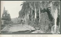 "<span class=""caption-caption"">Palm Avenue, Botanical Gardens, Rockhampton</span>. <br />From <span class=""caption-book"">Glimpses of Sunny Queensland (3rd edition)</span>, <span class=""caption-creator"">Queensland Government Intelligence and Tourist Bureau</span>, Brisbane, 1914, collection of <span class=""caption-contributor"">Centre for the Government of Queensland</span>."