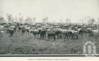 "<span class=""caption-caption"">Cattle on Burleigh Station</span>. <br />From <span class=""caption-book"">Glimpses of Sunny Queensland (3rd edition)</span>, <span class=""caption-creator"">Queensland Government Intelligence and Tourist Bureau</span>, Brisbane, 1914, collection of <span class=""caption-contributor"">Centre for the Government of Queensland</span>."