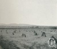 """<span class=""""caption-caption"""">Life and industry on the Darling Downs, wheat scene</span>. <br />From <span class=""""caption-book"""">Glimpses of Sunny Queensland (3rd edition)</span>, <span class=""""caption-creator"""">Queensland Government Intelligence and Tourist Bureau</span>, Brisbane, 1914, collection of <span class=""""caption-contributor"""">Centre for the Government of Queensland</span>."""