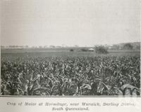 """<span class=""""caption-caption"""">Crop of maize at Hermitage, near Warwick</span>. <br />From <span class=""""caption-book"""">The Pocket Queensland</span>, <span class=""""caption-creator"""">Queensland Government Intelligence and Tourist Bureau</span>, Brisbane, 1921, collection of <span class=""""caption-contributor"""">Centre for the Government of Queensland</span>."""