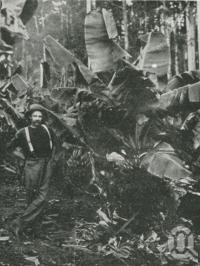 "<span class=""caption-caption"">Banana grove, Buderim Mountain</span>. <br />From <span class=""caption-book"">The Pocket Queensland</span>, <span class=""caption-creator"">Queensland Government Intelligence and Tourist Bureau</span>, Brisbane, 1921, collection of <span class=""caption-contributor"">Centre for the Government of Queensland</span>."
