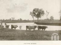 "<span class=""caption-caption"">Logan River, Beaudesert</span>. <br />From <span class=""caption-book"">Official Souvenir Beaudesert and National Park Lamington Plateau</span>, <span class=""caption-creator"">Beaudesert Shire Council</span>, Brisbane, 1935, collection of <span class=""caption-contributor"">Centre for the Government of Queensland</span>."