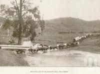 "<span class=""caption-caption"">Hauling logs to Buchanan's Mill, Beaudesert</span>. <br />From <span class=""caption-book"">Official Souvenir Beaudesert and National Park Lamington Plateau</span>, <span class=""caption-creator"">Beaudesert Shire Council</span>, Brisbane, 1935, collection of <span class=""caption-contributor"">Centre for the Government of Queensland</span>."