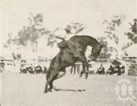 "<span class=""caption-caption"">Buckjumping at the Beaudesert show</span>. <br />From <span class=""caption-book"">Official Souvenir Beaudesert and National Park Lamington Plateau</span>, <span class=""caption-creator"">Beaudesert Shire Council</span>, Brisbane, 1935, collection of <span class=""caption-contributor"">Centre for the Government of Queensland</span>."