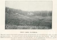 "<span class=""caption-caption"">Fruit farms, Waterloo</span>. <br />From <span class=""caption-book"">The Burnett and Isis Pictorial</span>, <span class=""caption-creator"">Richards & Kingdon</span>, Bundaberg, 1927, collection of <span class=""caption-contributor"">Centre for the Government of Queensland</span>."