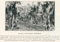 "<span class=""caption-caption"">Banana plantation, Waterloo</span>. <br />From <span class=""caption-book"">The Burnett and Isis Pictorial</span>, <span class=""caption-creator"">Richards & Kingdon</span>, Bundaberg, 1927, collection of <span class=""caption-contributor"">Centre for the Government of Queensland</span>."