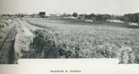 """<span class=""""caption-caption"""">Canefields at Childers</span>. <br />From <span class=""""caption-book"""">Australia Unlimited</span>, <span class=""""caption-creator"""">Edwin J Brady</span>, <span class=""""caption-publisher"""">George Robertson & Co</span>, Melbourne, 1918, collection of <span class=""""caption-contributor"""">Centre for the Government of Queensland</span>."""