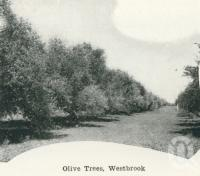 "<span class=""caption-caption"">Olive trees, Westbrook</span>. <br />From <span class=""caption-book"">Australia Unlimited</span>, <span class=""caption-creator"">Edwin J Brady</span>, <span class=""caption-publisher"">George Robertson & Co</span>, Melbourne, 1918, collection of <span class=""caption-contributor"">Centre for the Government of Queensland</span>."