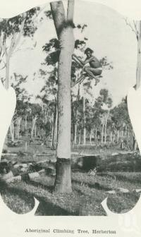 "<span class=""caption-caption"">Aboriginal climbing tree, Herberton</span>. <br />From <span class=""caption-book"">Australia Unlimited</span>, <span class=""caption-creator"">Edwin J Brady</span>, <span class=""caption-publisher"">George Robertson & Co</span>, Melbourne, 1918, collection of <span class=""caption-contributor"">Centre for the Government of Queensland</span>."