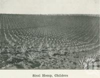 """<span class=""""caption-caption"""">Sisal Hemp, Childers</span>. <br />From <span class=""""caption-book"""">Australia Unlimited</span>, <span class=""""caption-creator"""">Edwin J Brady</span>, <span class=""""caption-publisher"""">George Robertson & Co</span>, Melbourne, 1918, collection of <span class=""""caption-contributor"""">Centre for the Government of Queensland</span>."""