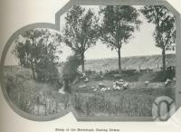 """<span class=""""caption-caption"""">Sheep at the Hermitage, Darling Downs</span>. <br />From <span class=""""caption-book"""">Australia Unlimited</span>, <span class=""""caption-creator"""">Edwin J Brady</span>, <span class=""""caption-publisher"""">George Robertson & Co</span>, Melbourne, 1918, collection of <span class=""""caption-contributor"""">Centre for the Government of Queensland</span>."""